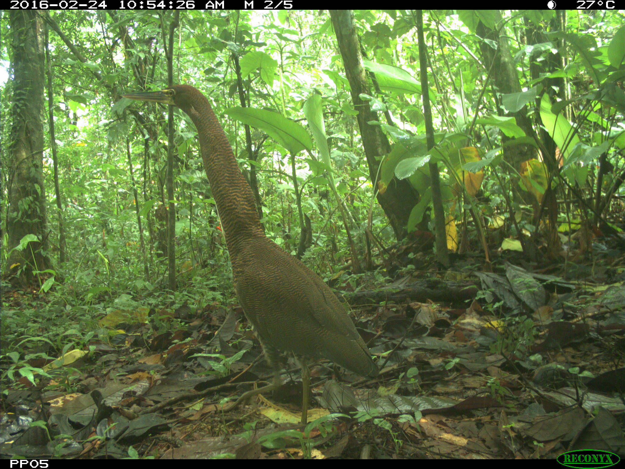 Other Bird species